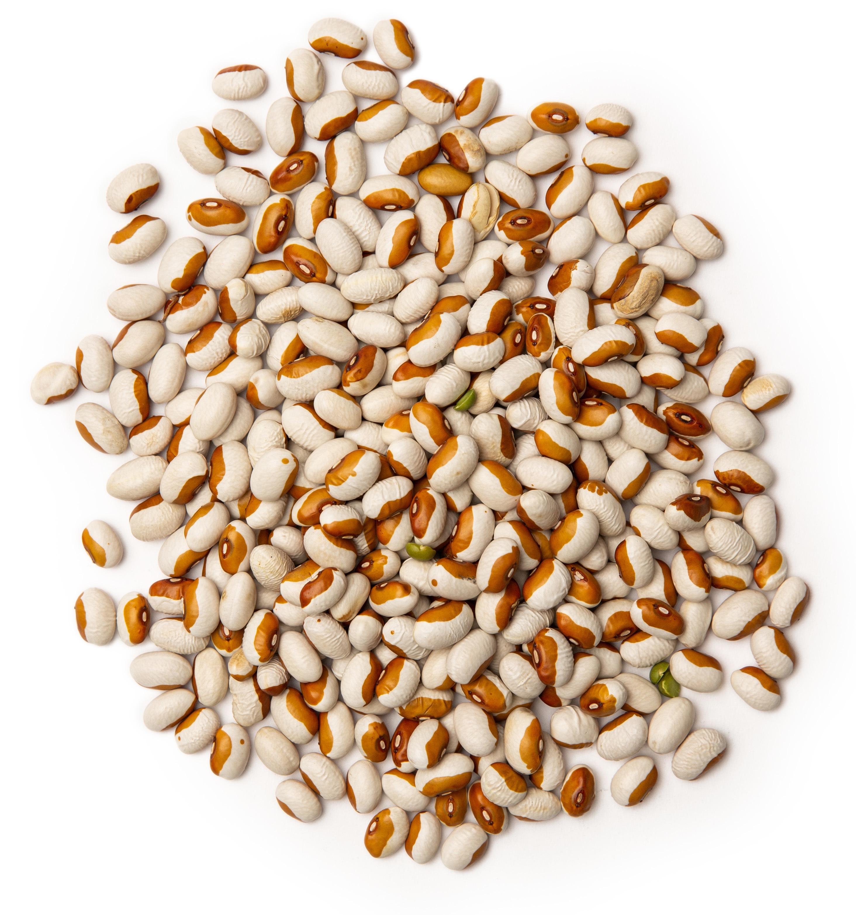 Detail of Yelloweye Beans