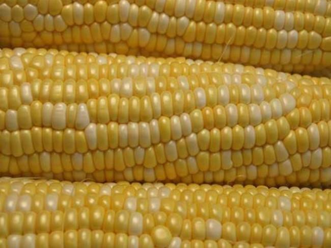 72 Sweet Corn Web1